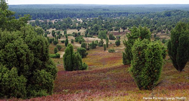 Überblick über eine weite Fläche der Lüneburger Heide