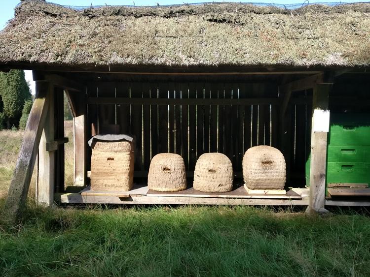 Blick auf Bienenkörbe in einem Bienenzaun in der Heide