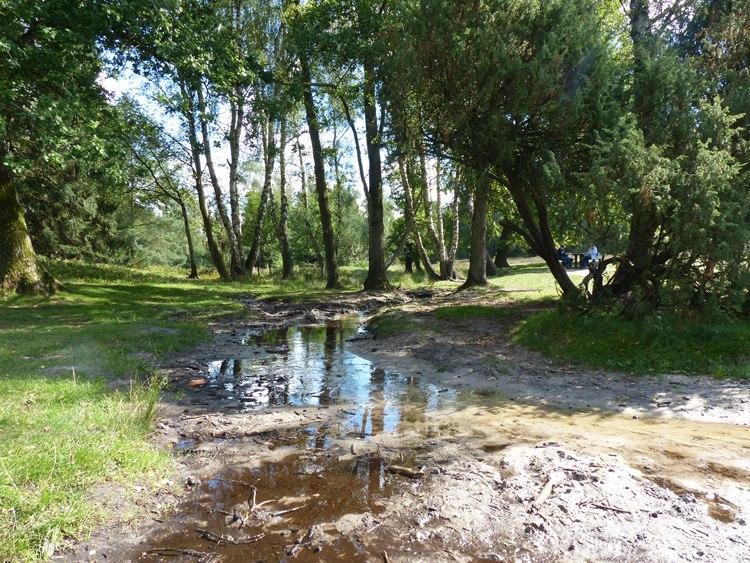 eine Heidefläche im Büsenbachtal in Handeloh