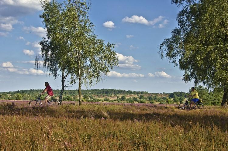 eine Gruppe Radfahrer in der Lüneburger Heide