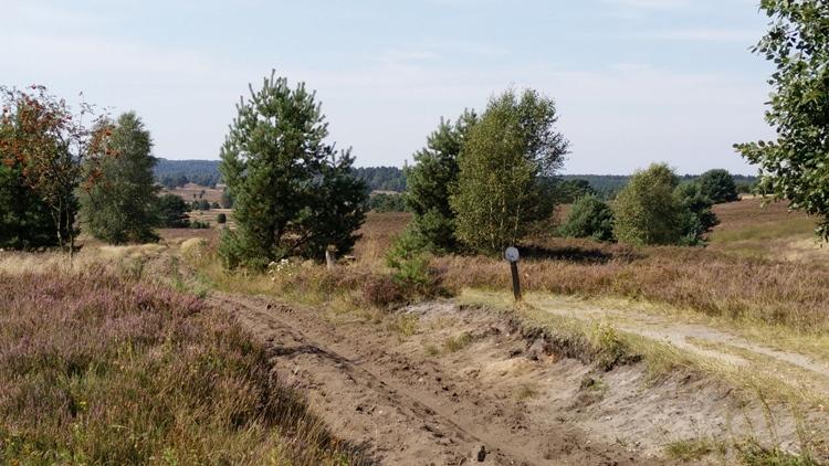 Kutschweg in der Heide
