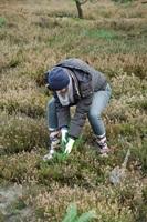 Heideblüte Schneverdingen e.V.: harte Arbeit!