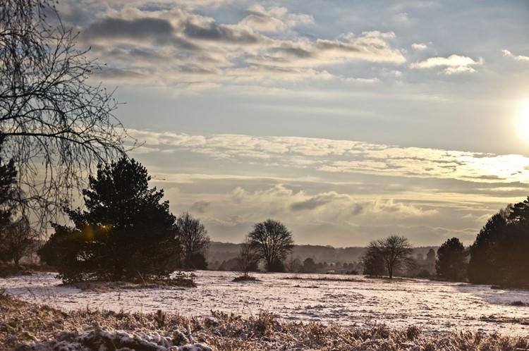 schneebedeckte Heidelandschaft