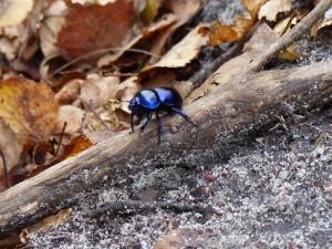 Vortrag zum Insektensterben