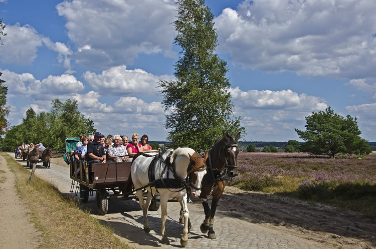 Kutschen in der Lüneburger Heide