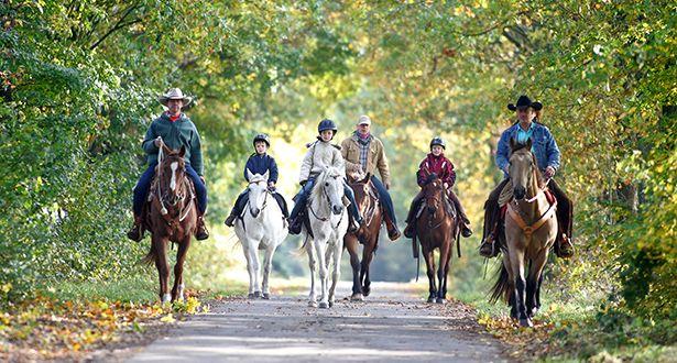 Eine Gruppe Reiter reitet auf einer Allee