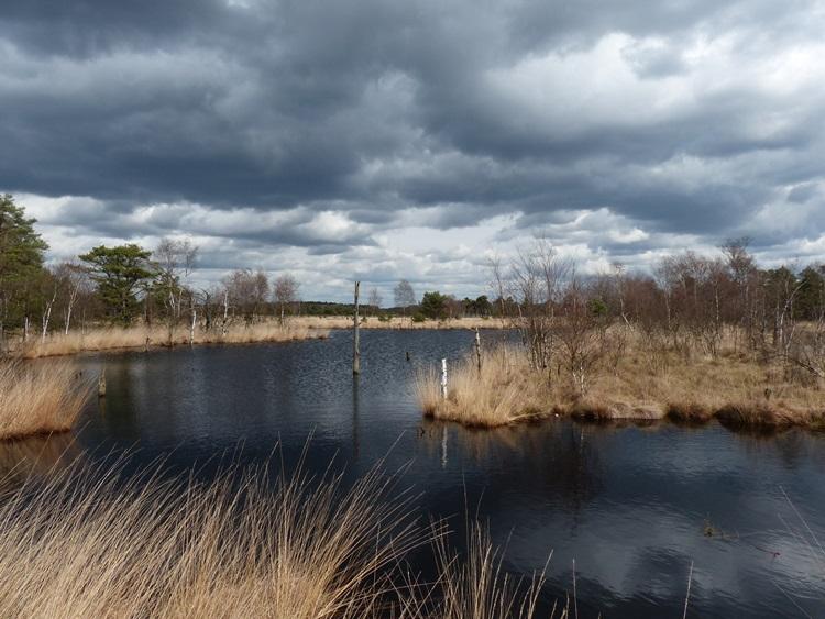 dunkle Wolken über dem Schneverdinger Pietzmoor