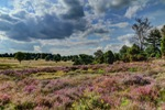 Die Timmerloher Heide - ein Besuch lohnt sich