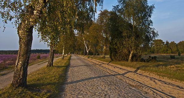 Ein Pflasterweg führt an Heidefläche vorbei