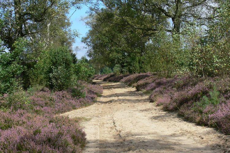 Ein Weg der durch eine Heide führt