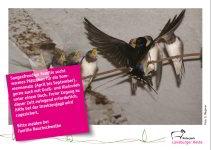 Bild der Postkarte Rauchschwalbe
