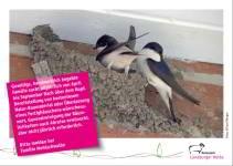 Bild der Postkarte Mehlschwalbe